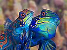 Mating Mandarins by Henry Jager