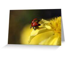 Ladybird on yellow flower Greeting Card