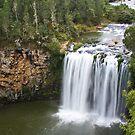 Dangar Falls, Dorrigo, Australia by Lawrie McConnell