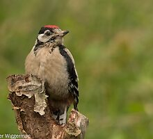 Juvenile Great Spotted Woodpecker - IV by Peter Wiggerman