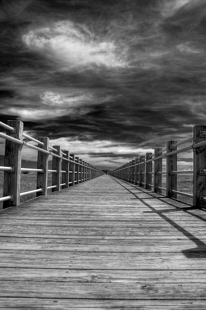 The Vanishing Point by Tim Mannle