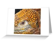 Eye of the Land Iguana Greeting Card