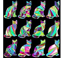 Colorful Cats 3 Photographic Print
