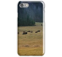 In The Prairies, Bison Relaxing iPhone Case/Skin