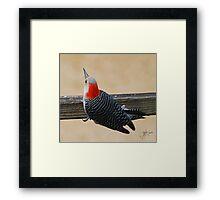 Female Rebellied Woodpecker Framed Print