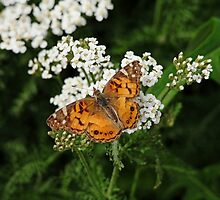 The American Painted Lady by Debbie Oppermann