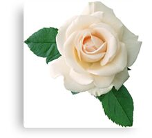 Gentle white rose Canvas Print