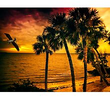 New Year in Florida Photographic Print