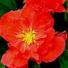 Flower 2 by Arkani