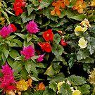 Flowers 3 by Arkani