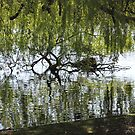 Willow Reflection by Vicki Spindler (VHS Photography)