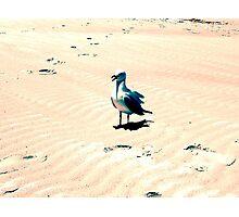 Retro Seagull Photographic Print