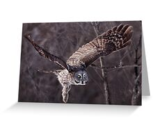 Dark Side Of  The Woods/ Great Gray Owl Greeting Card