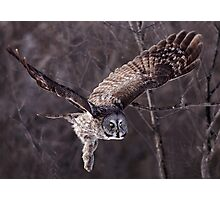 Dark Side Of  The Woods/ Great Gray Owl Photographic Print