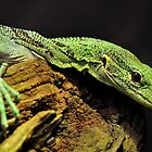 Green with Envy by Dennis Stewart