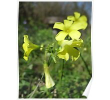 Yellow wild flowers Poster