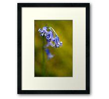 Bluebell Flowers Close Up Framed Print