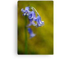 Bluebell Flowers Close Up Canvas Print