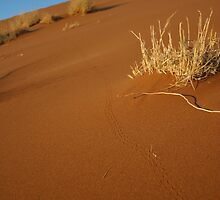 Beetle Tracks in Sand Dune by nickcastle
