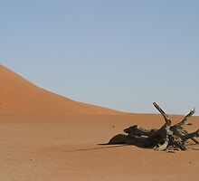 Dead Tree at Dead Vlei by nickcastle
