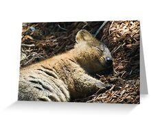 Quokka Dreaming Greeting Card