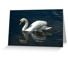 Solitary Swan and Reflection Greeting Card