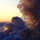 Sunset light by Bluesrose