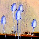 Common Teasle Inversion by ©The Creative  Minds