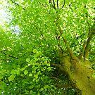 Leafy Green by Mark Willson