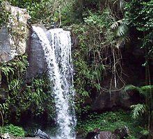 Luscious Queensland - Curtis Falls by Angela Simpkin