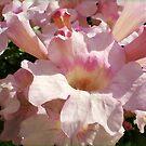 Pink Petunias in Spring by EdsMum