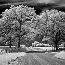 A Country Mile by Rodney  Harvey