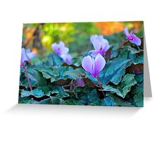 Sleeping Beauties - Cyclamen Greeting Card