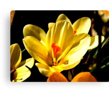 Spring Flowers #2 Canvas Print