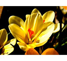 Spring Flowers #2 Photographic Print