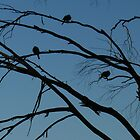 Birds at Dusk- Langwarrin Flora and Fauna Reserve by Portia Greenwood