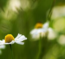 Summerimpressions by Streichelweich