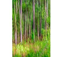 The Woodlands  Photographic Print