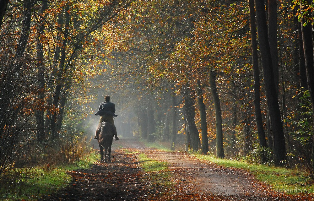 Galloping down the autumnal path by jchanders