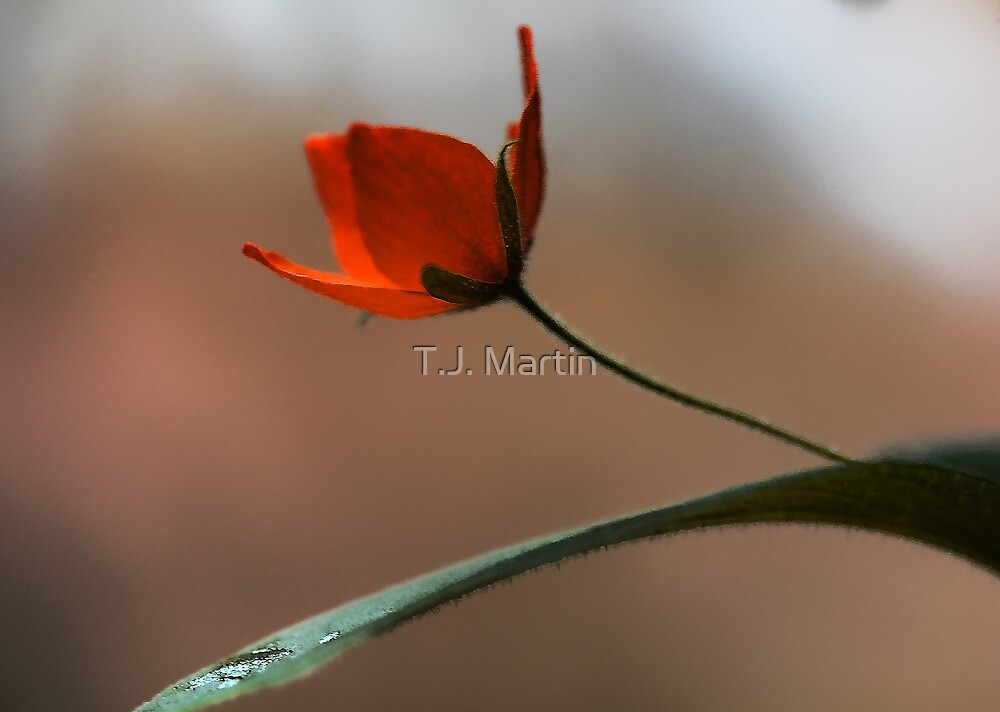 -And, It's Starting To Rain by T.J. Martin