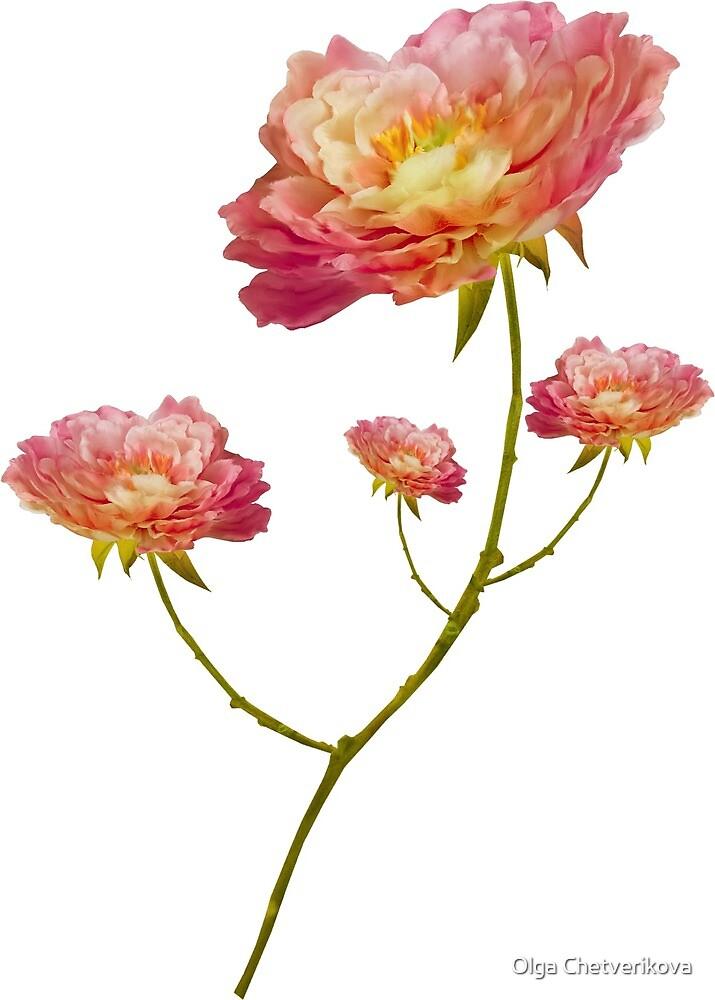 FLOWERS by Olga Chetverikova
