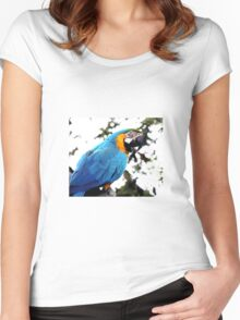 Macaw parrot Women's Fitted Scoop T-Shirt