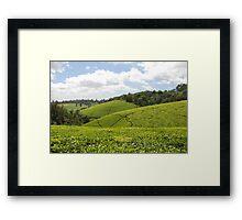 Kenyan Tea Fields Framed Print
