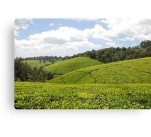 Kenyan Tea Fields Canvas Print