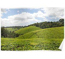 Kenyan Tea Fields Poster