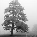 Foxhall Tree by Aishling O'Neill