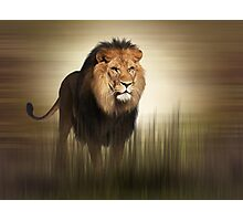 King Photographic Print
