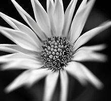 flor B&W by ser-y-star