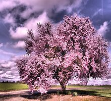 Dressed In Pink by jeanniechris