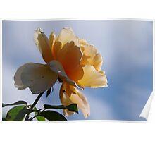 Rosey Sky Poster